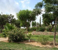 emplacement camping Costa Azahar